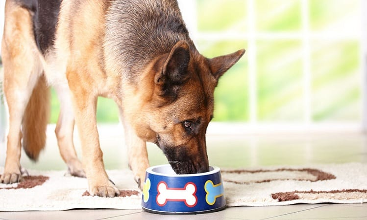 What Is The Best Food For German Shepherds?