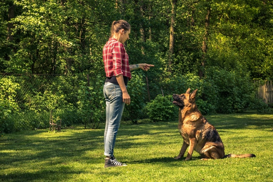 German Shepherd Training - Things You Need To Know