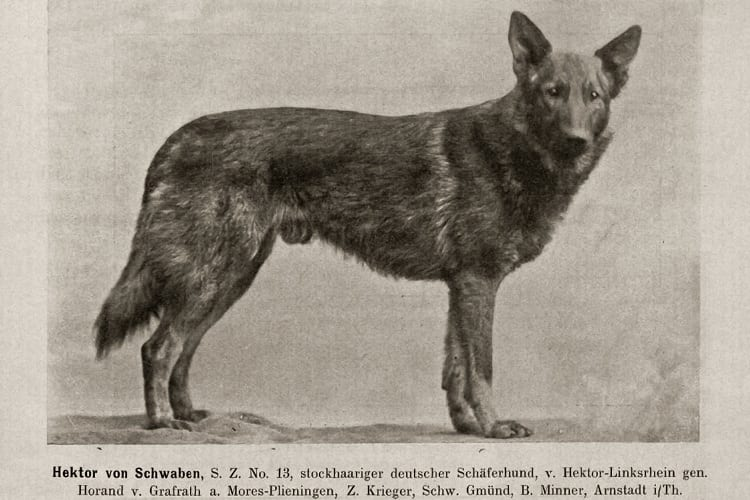 Does The Current GSD Version Look Like The Original?