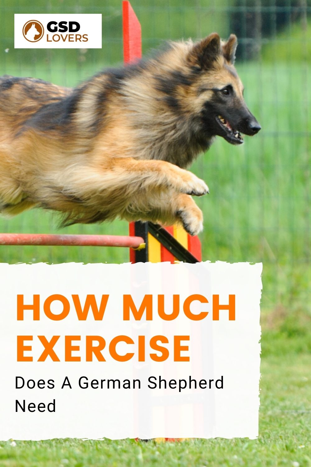 How Much Exercise Does A German Shepherd Need 1