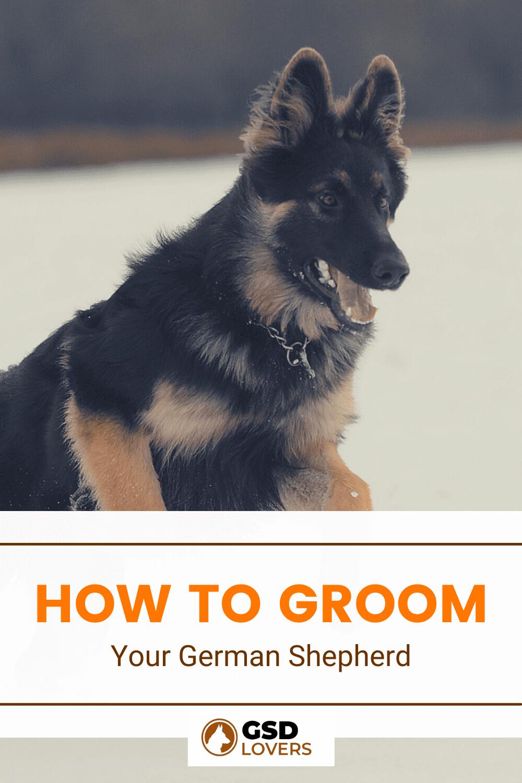 How To Groom Your German Shepherd 1