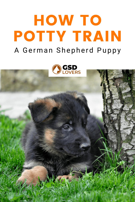 How To Potty Train A German Shepherd Puppy 1