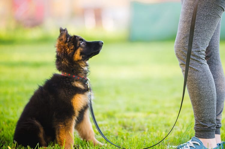 TEACH YOUR PUPPY TO RECOGNIZE ITS NAME