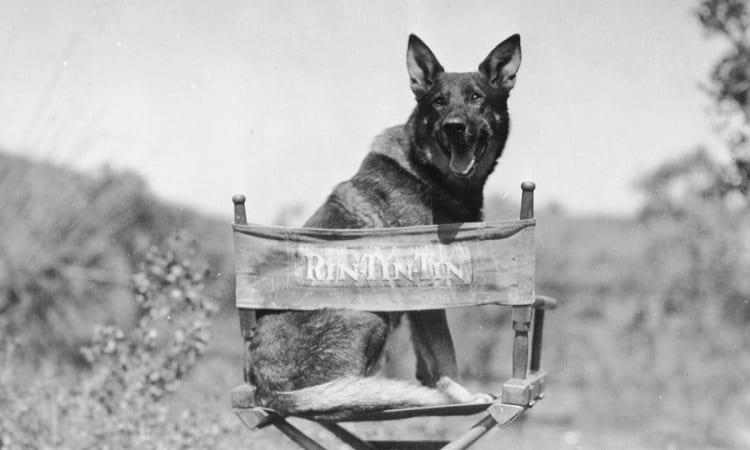 German Shepherds In Hollywood