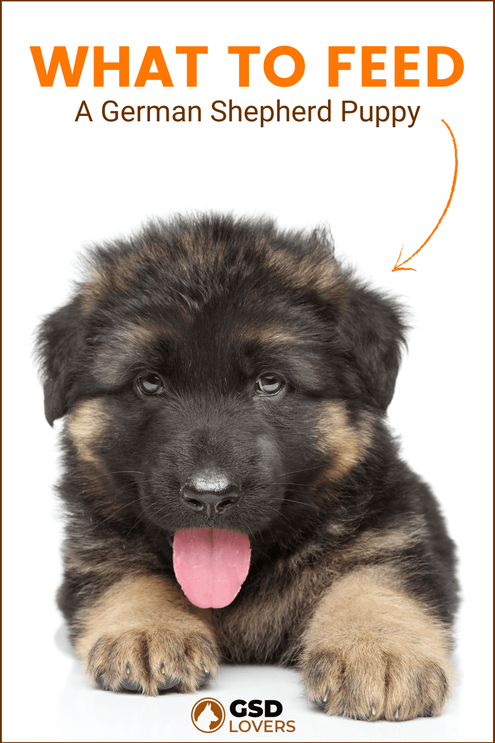 what to feed a german shepherd puppy