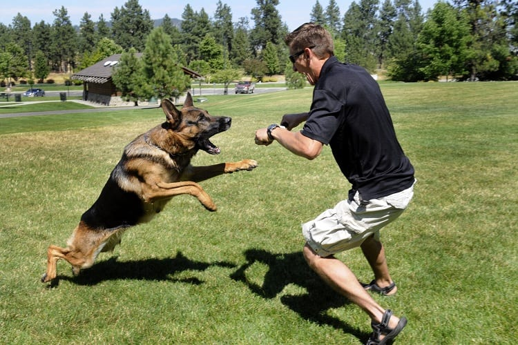 Can Your German Shepherd Exercise By Themself?