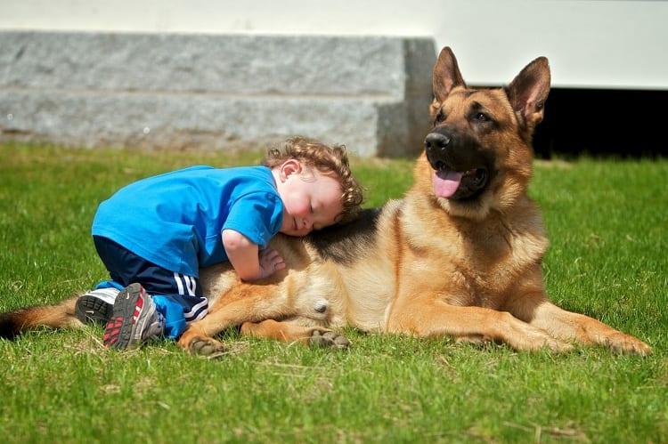 German Shepherds And Kids
