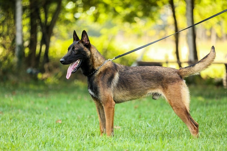 MALINOIS MENTAL AND EMOTIONAL CARE