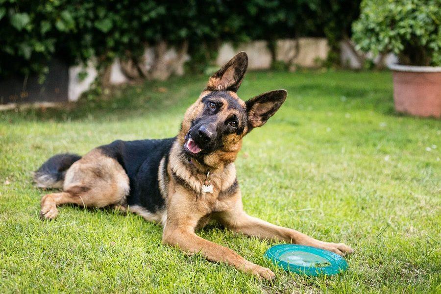 Best Dog Nail Grinder For German Shepherds