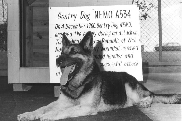 Nemo – famous German Shepherd MWD – 1962