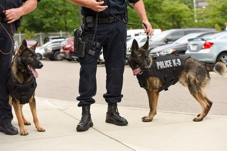 What Happens To Police Dogs After They Retire?