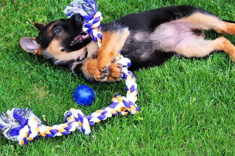 HOW CAN I KEEP MY GERMAN SHEPHERD ENTERTAINED?