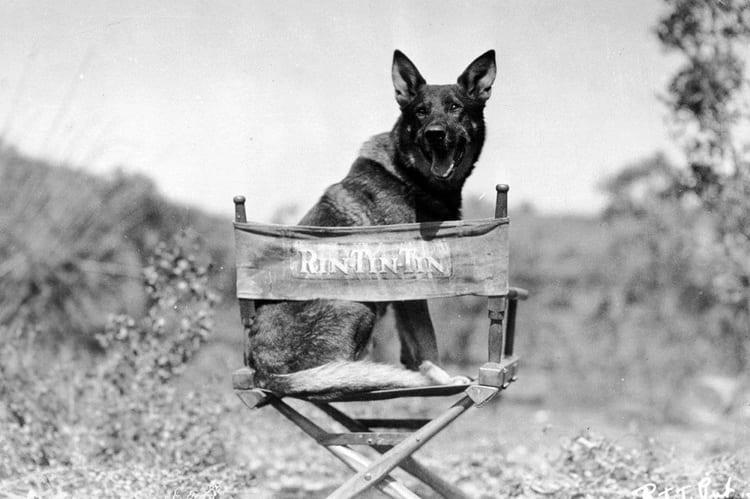 Rin Tin Tin - 1918