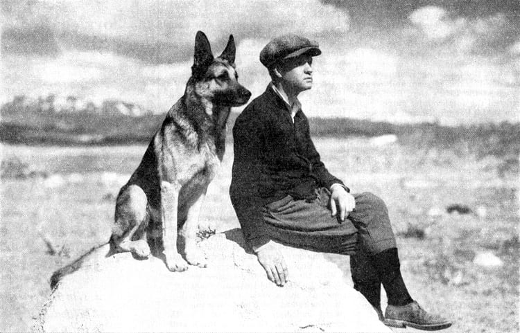 11 Famous German Shepherds 1