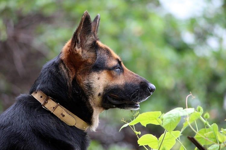 SHOULD I TAKE MY DOG'S COLLAR OFF AT NIGHT?
