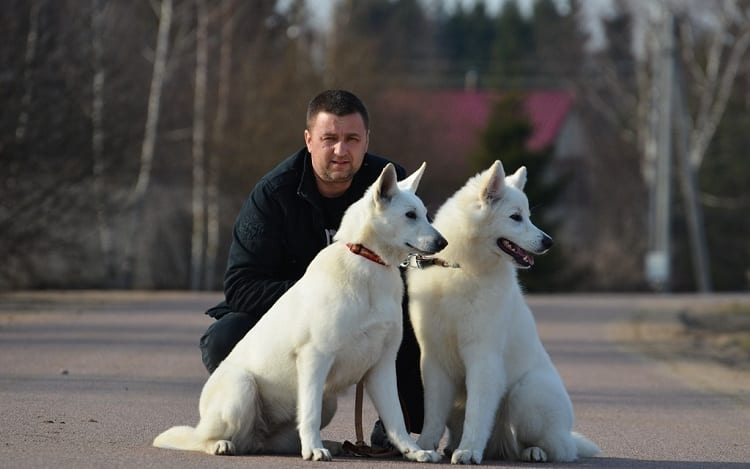 Are White German Shepherds Good Pets