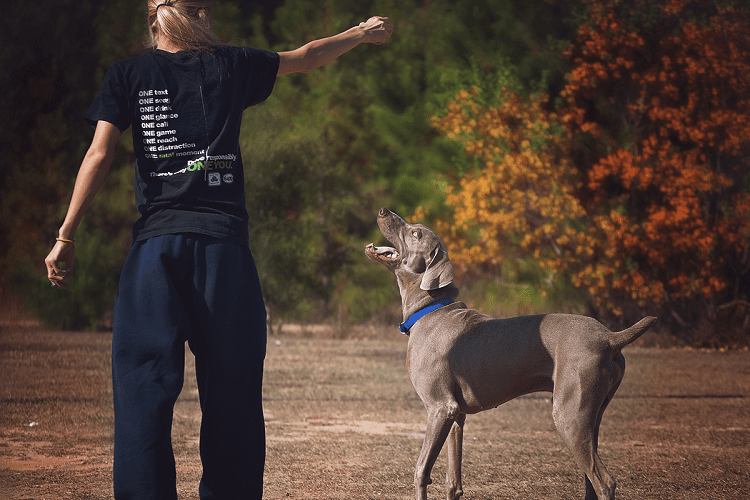 Do Aggressive Dogs Need A Trainer?
