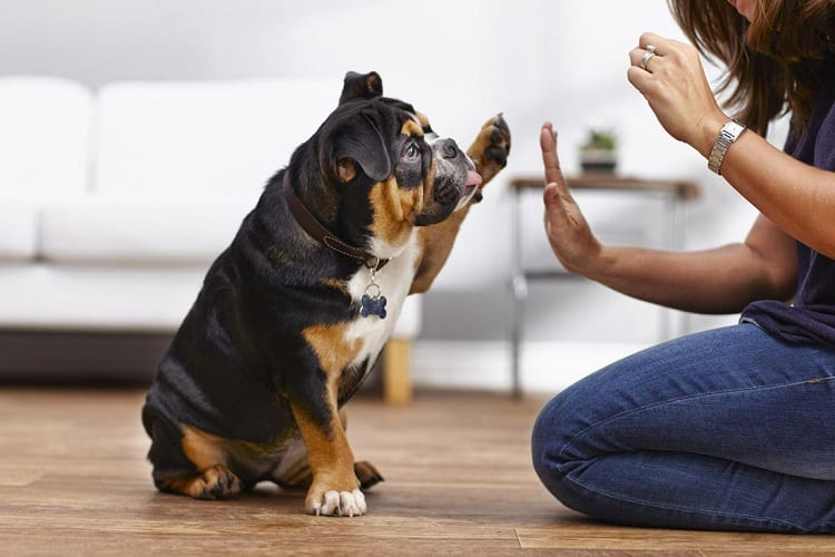 Best Age To Train A Dog