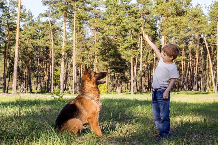 How To Choose a German Shepherd For Your Kids