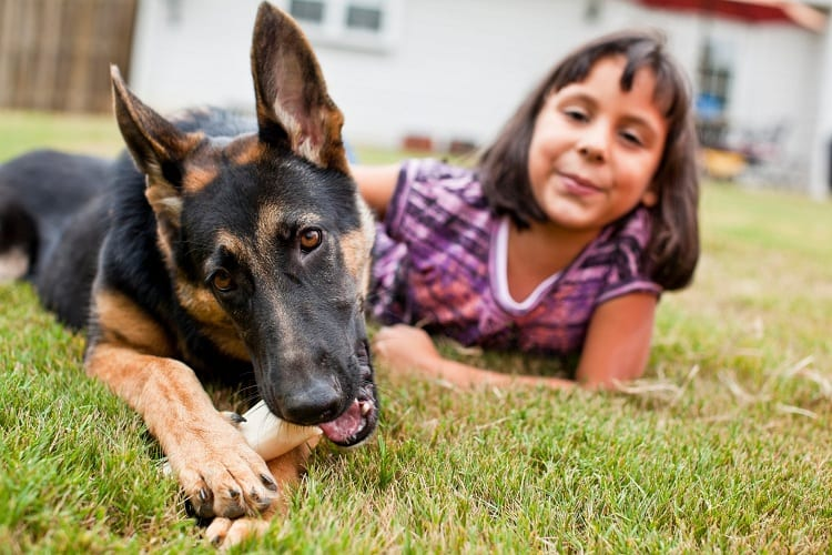 Teaching Kids To Be Responsible Around German Shepherds