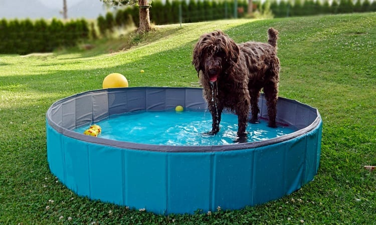 WHAT POOL TYPE IS BEST FOR DOGS?
