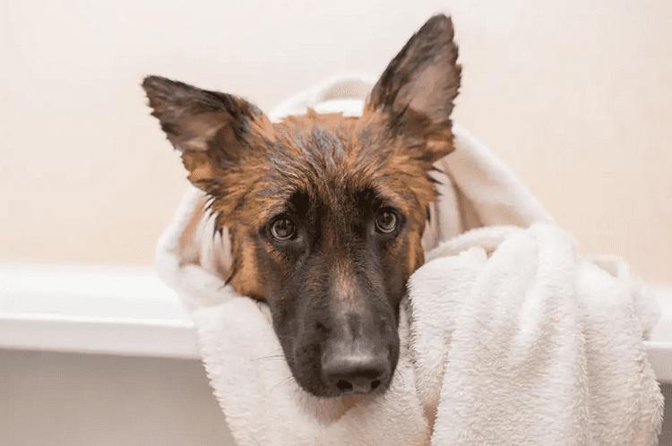 Bath Occasionally