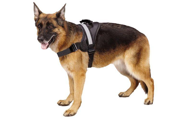 Expawlorer Big Dog Harness Review