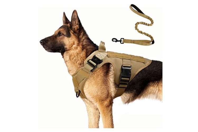 Rabbitgoo Tactical Dog Harness and Bungee Dog Leash Set Review